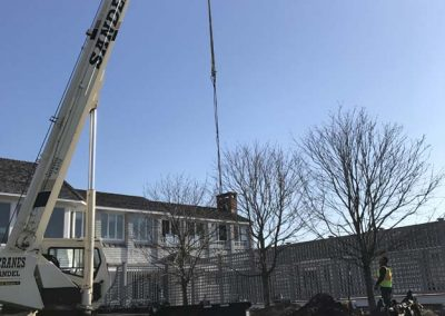 Sandel Cranes Arbor Installation and Removal
